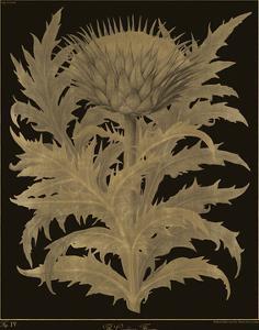 Botanicus - Cardoon by Maria Mendez