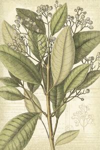 Botany Sketchbook II by Maria Mendez