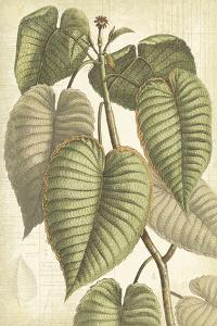 Botany Sketchbook IV by Maria Mendez