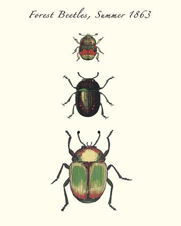 Forest Beetles
