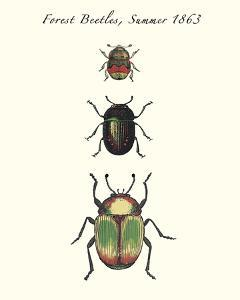 Forest Beetles by Maria Mendez