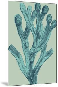 Fucus vesiculosus - Ocean by Maria Mendez