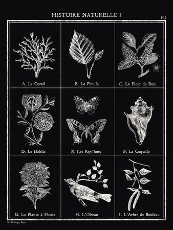Histoire Naturelle I