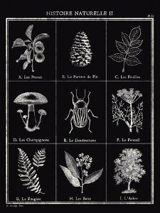 Histoire Naturelle II by Maria Mendez