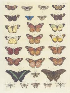 Meadow Butterflies by Maria Mendez