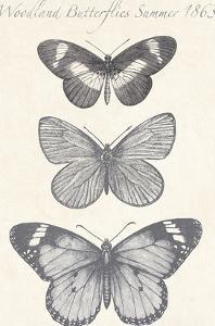 Seasonal Butterflies II by Maria Mendez