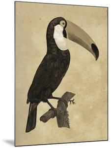 The Vintage Toucan I by Maria Mendez