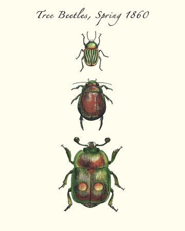 Tree Beetles