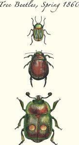 Tree Beetles by Maria Mendez