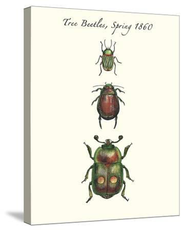 Tree Beetles