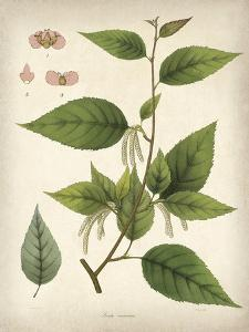 Vintage East Indian Plants III by Maria Mendez