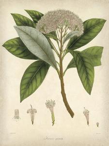 Vintage East Indian Plants V by Maria Mendez