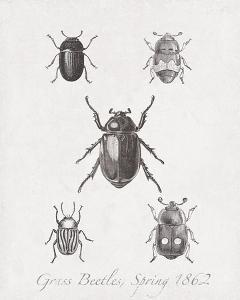 Woodland Insects II by Maria Mendez