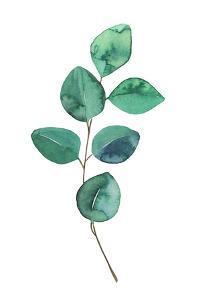 Beautiful Eucalyptus - Botanical Watercolor by Maria Mirnaya