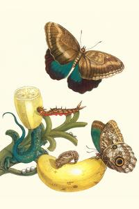 Banana Plant with Teucer Giant Owl Butterfly and a Rainbow Whiptail Lizard by Maria Sibylla Merian