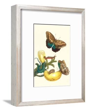 Banana Plant with Teucer Giant Owl Butterfly and a Rainbow Whiptail Lizard