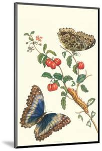 Barbados Cherry Tree with a Moth by Maria Sibylla Merian