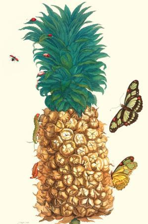 Butterfly and Beetle on a Pineapple by Maria Sibylla Merian