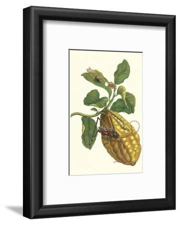 Citron with Monkey Slug and a Harlequin Beetle