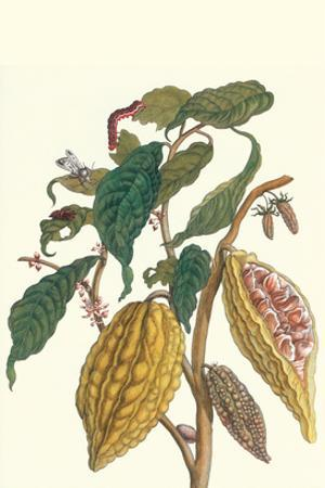 Cocoa Plant with Southern Army Worm by Maria Sibylla Merian