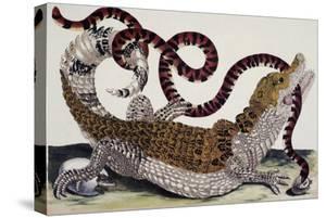 Crocodile and Snake by Maria Sibylla Merian