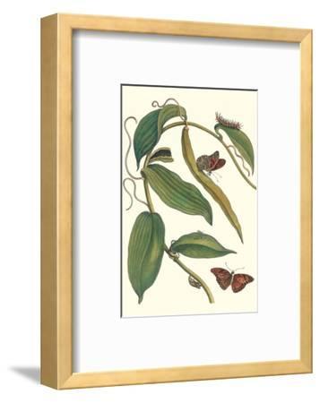 Flat-Leaved Vanila Plant with a Gulf Fritillary