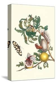 Fruiting Guava and Stinging Caterpillar by Maria Sibylla Merian
