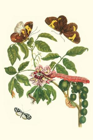 Leguminous Plant with a Sophorae Owl Caterpillar and an Aegle Clearwing Butterfly