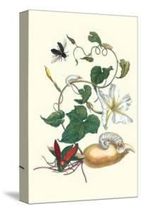 Moonflower with Giant Metallic Ceiba Borer and a Horned Passalus Beetle by Maria Sibylla Merian
