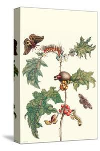 Moths and a Potato Plant by Maria Sibylla Merian
