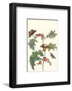 Moths and a Potato Plant by Maria Sibylla Merian