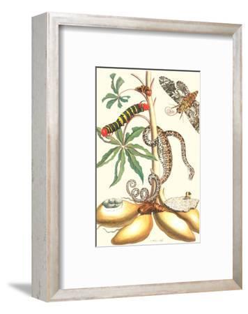 Moths and a Tree Boa