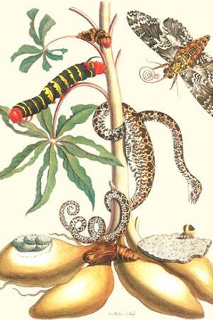 Moths and a Tree Boa by Maria Sibylla Merian