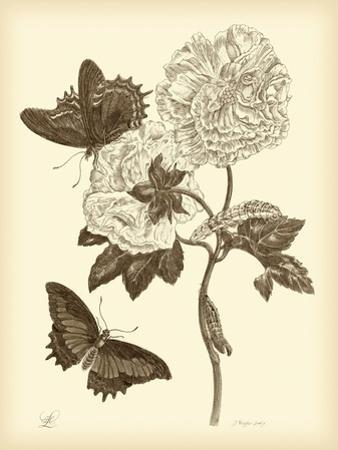 Nature Study in Sepia IV by Maria Sibylla Merian