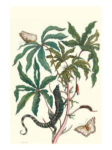 Peacock Butterfly with a Lizard by Maria Sibylla Merian