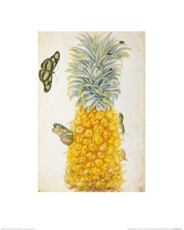Pineapple by Maria Sibylla Merian