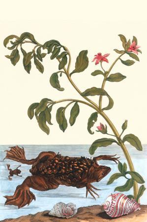Shoreline Purslane with a Common Surinam Toad by Maria Sibylla Merian