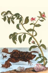 Shoreline Purslane with a Common Surinam Toad by Maria Sibylla Merian