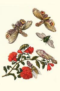 Sundown Cicada and a Peanut-Headed Lantern Fly by Maria Sibylla Merian