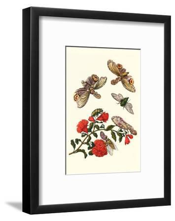 Sundown Cicada and a Peanut-Headed Lantern Fly