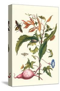 Sweet Potato with Melonworm and Giant Big-Legged Bug by Maria Sibylla Merian