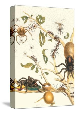 Tarantulas and Army Ants