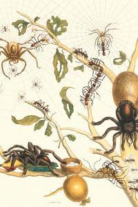 Tarantulas and Army Ants by Maria Sibylla Merian