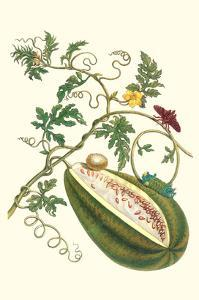 Watermelon and Slug Moth by Maria Sibylla Merian