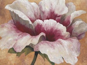 Pink Begonia by Maria Torróntegui