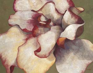 White Begonia by Maria Torróntegui