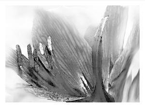 Amarilis by Maria Trad