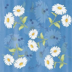 Daisies by Maria Trad
