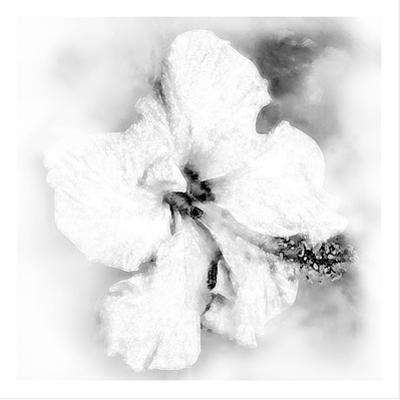 Hibiscus by Maria Trad