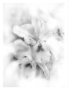 Orchid Magena by Maria Trad